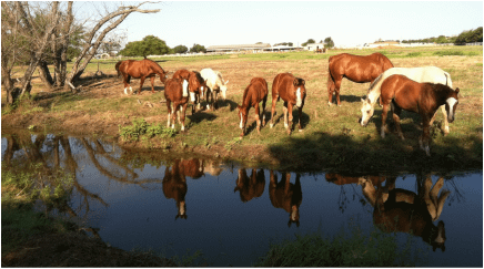 Haverty Ranch – Texas Horse Ranch Extraordinaire!